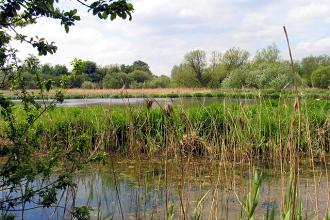 Pam Brophy Thatcham Reedbeds Nature Reserve CC BY-SA 2.0